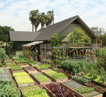 Exciting Ideas To Grow Veggies In Your Garden 30