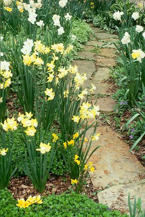 Innovative Stepping Stone Pathway Decor For Your Garden 56