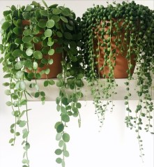 Beautiful Hanging Planter Ideas For Outdoor 32