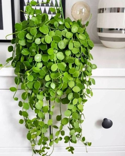 Beautiful Hanging Planter Ideas For Outdoor 38