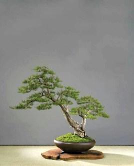 Inspiring Bonsai Tree Ideas For Your Garden 05