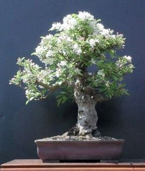 Inspiring Bonsai Tree Ideas For Your Garden 07