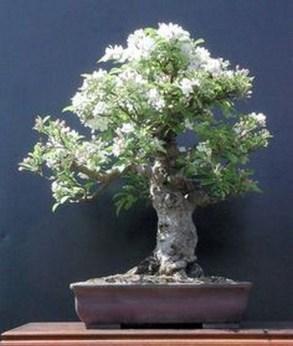 Inspiring Bonsai Tree Ideas For Your Garden 07
