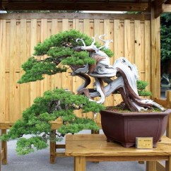Inspiring Bonsai Tree Ideas For Your Garden 11