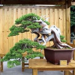Inspiring Bonsai Tree Ideas For Your Garden 11