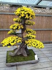 Inspiring Bonsai Tree Ideas For Your Garden 13