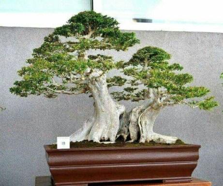 Inspiring Bonsai Tree Ideas For Your Garden 15