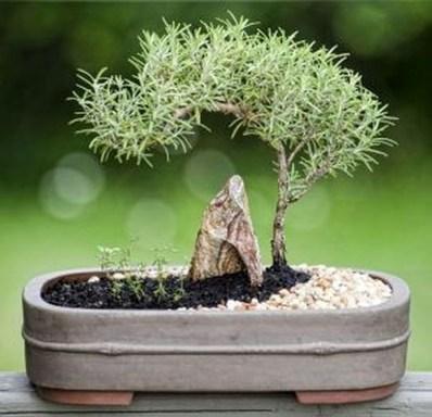Inspiring Bonsai Tree Ideas For Your Garden 17