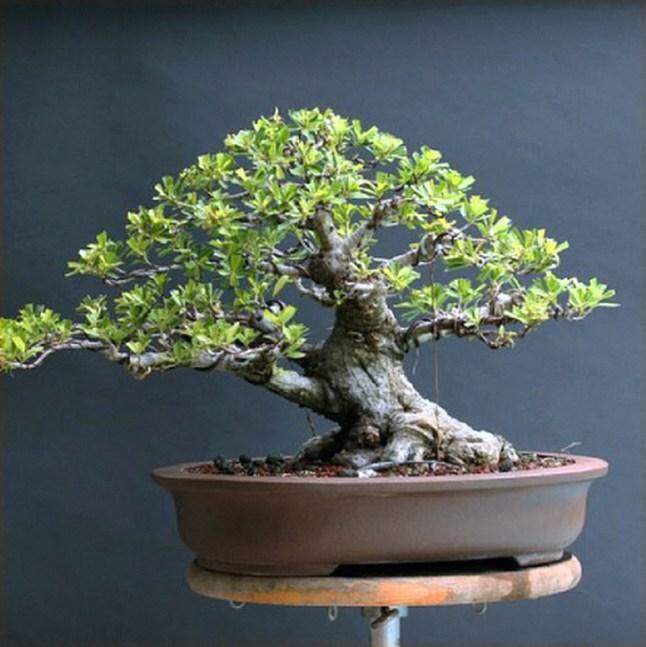 Inspiring Bonsai Tree Ideas For Your Garden 23