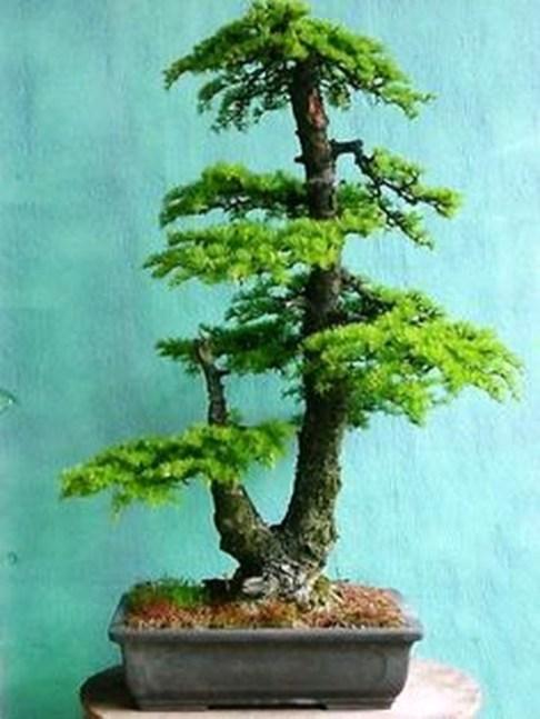 Inspiring Bonsai Tree Ideas For Your Garden 24