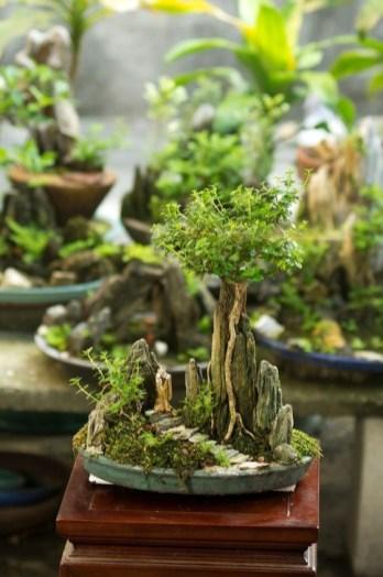 Inspiring Bonsai Tree Ideas For Your Garden 35