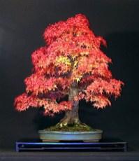 Inspiring Bonsai Tree Ideas For Your Garden 42