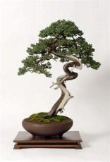 Inspiring Bonsai Tree Ideas For Your Garden 45