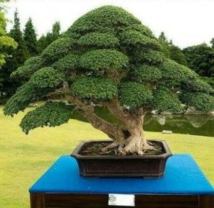 Inspiring Bonsai Tree Ideas For Your Garden 48
