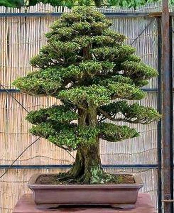 Inspiring Bonsai Tree Ideas For Your Garden 57