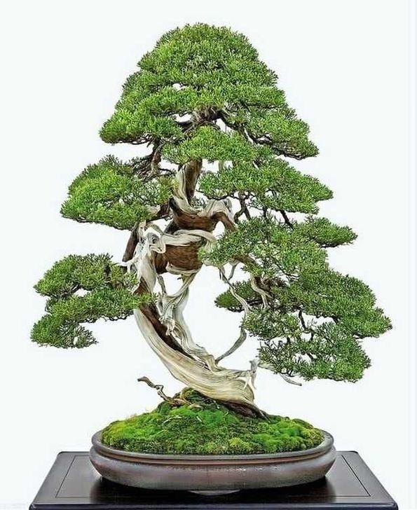 Inspiring Bonsai Tree Ideas For Your Garden 58