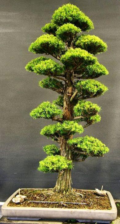 Inspiring Bonsai Tree Ideas For Your Garden 59