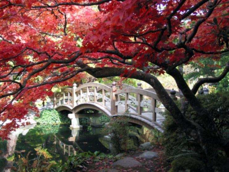 Cool Garden Bridge Ideas You Will Totally Love 16
