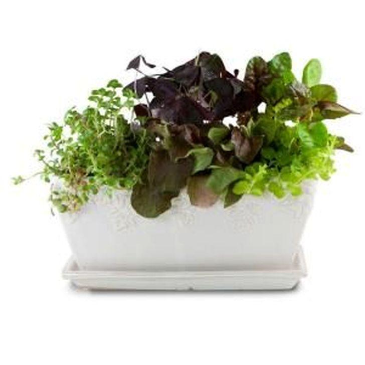 Wonderful Window Box Planters Yo Beautify Up Your Home 01