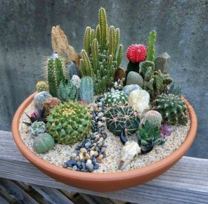 Cool Small Cactus Ideas For Home Decoration 18
