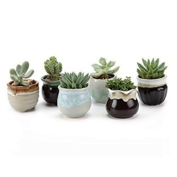 Cool Small Cactus Ideas For Home Decoration 34