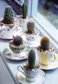 Cool Small Cactus Ideas For Home Decoration 35