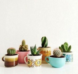 Cool Small Cactus Ideas For Home Decoration 40