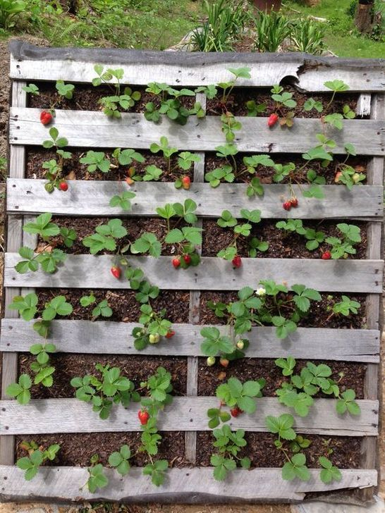 Genius DIY Projects Pallet For Garden Design Ideas 38