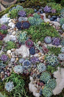 Best Ideas For Garden Succulent Landscaping 12