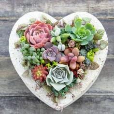 Best Ideas For Garden Succulent Landscaping 25