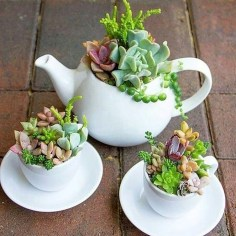 Best Ideas For Garden Succulent Landscaping 27