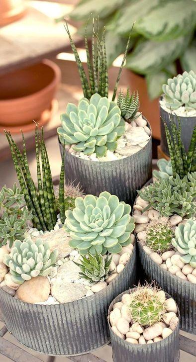 Best Ideas For Garden Succulent Landscaping 30