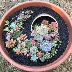 Best Ideas For Garden Succulent Landscaping 33