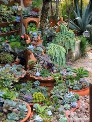 Best Ideas For Garden Succulent Landscaping 34
