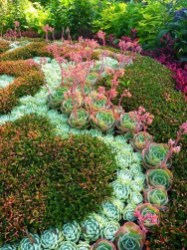 Best Ideas For Garden Succulent Landscaping 43