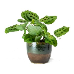 Modern Plant In Pot Ideas For Your House Decoration 01