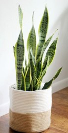 Modern Plant In Pot Ideas For Your House Decoration 14