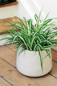 Modern Plant In Pot Ideas For Your House Decoration 18