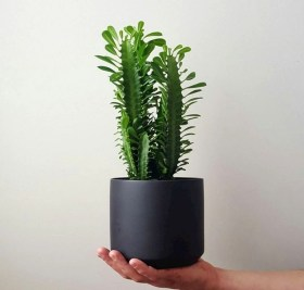 Modern Plant In Pot Ideas For Your House Decoration 19