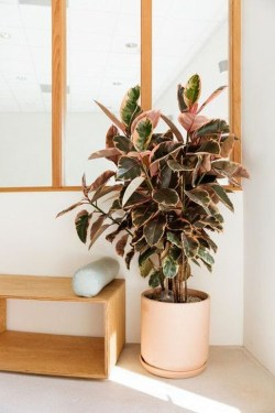 Modern Plant In Pot Ideas For Your House Decoration 25
