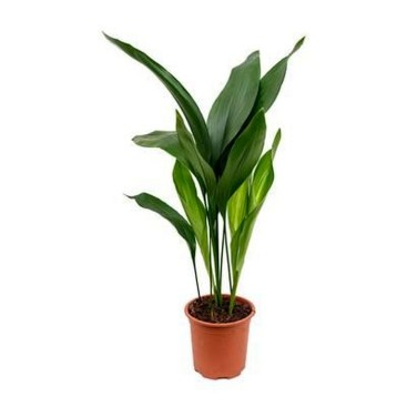 Modern Plant In Pot Ideas For Your House Decoration 34
