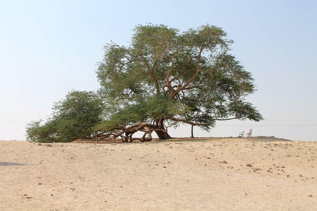 ಮರುಬೂಮಿ ಮರ The Tree of Life