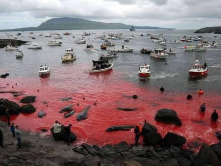 ತಿಮಿಂಗಲ, ಕೊಲೆ. slaughter, whales