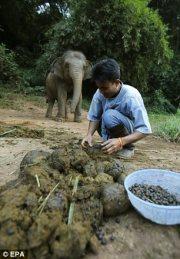 ಆನೆ ಲದ್ದಿ, ಕಾಪಿ ಬೀಜ, Elephant dung, coffee