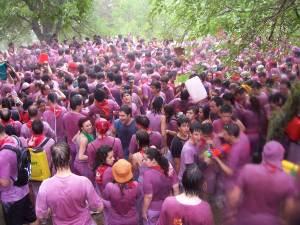 ವೈನ್ ಫೆಸ್ಟಿವಲ್. wine festival