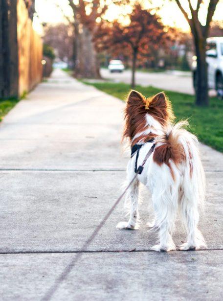 Jouw online honden cursus en honden training