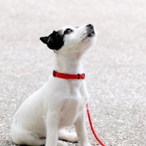 Hond online puppy cursus