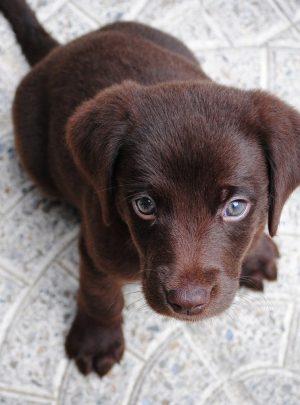 Basis cursus hond online