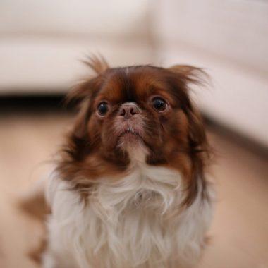 Vuurwerkangst cursus hond online