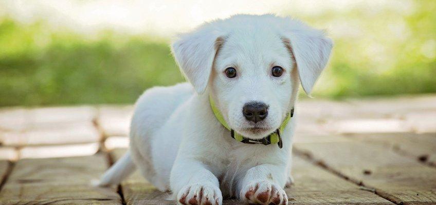 Plast jou pup extreem veel? Sluit dan eerst medische oorzaak uit